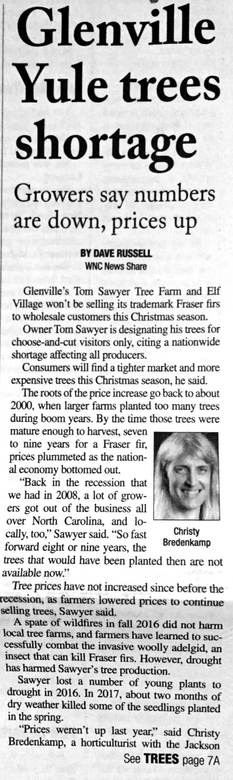 Shortage of Christmas Trees